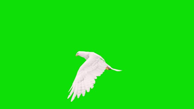 white eagle flying slow motion animation on green screen. the concept of animal, wildlife, games, back to school, 3d animation, short video, film, cartoon, organic, chroma key, character animation, design element, loopable - claw stock videos & royalty-free footage