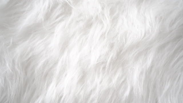 white fake animal hair fur - animal hair stock videos & royalty-free footage