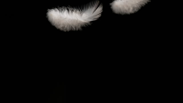 white feather falling against black background, normandy, slow motion 4k - フェザー点の映像素材/bロール