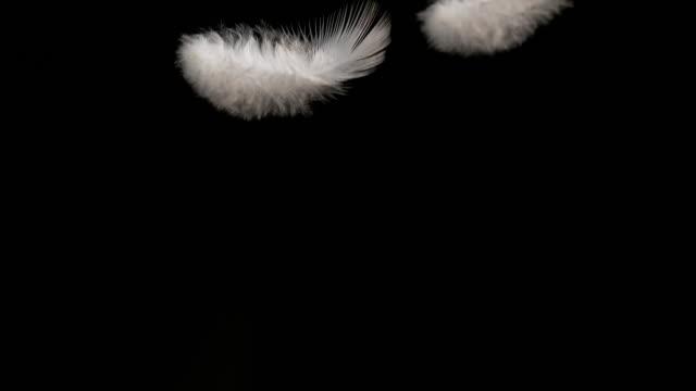 vídeos y material grabado en eventos de stock de white feather falling against black background, normandy, slow motion 4k - pluma de ave