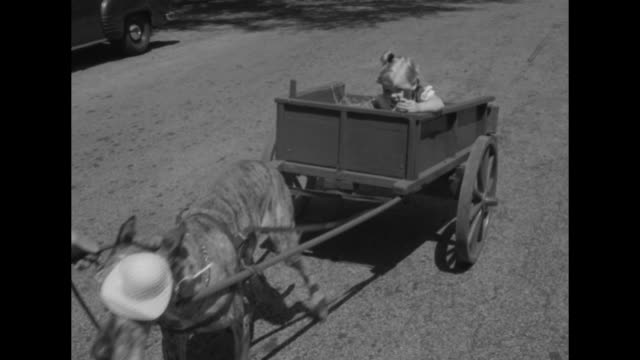 ms white female puts crying female toddler into donkey cart with 5 other little girls / vs cu toddlers in cart / ms man in gypsy scarf and earrings... - ice cream bar stock videos and b-roll footage