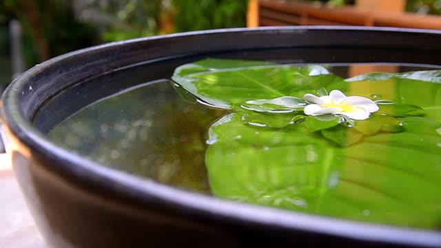 鍋の中の白い花と葉 - 胡坐点の映像素材/bロール