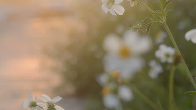 Weiße Blume im Sonnenuntergang