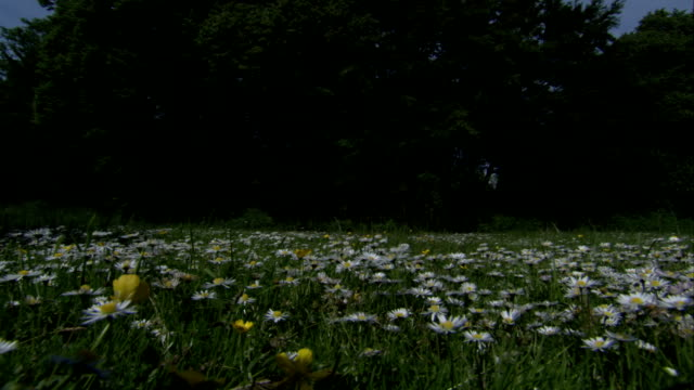 White flowers fill a meadow on the grounds of the Kinross House. Available in HD.