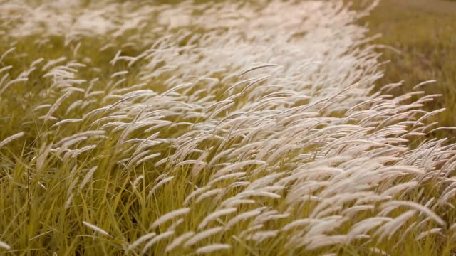 White flowers grass