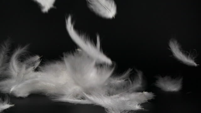 vídeos de stock, filmes e b-roll de penas fofas brancas caindo em fundo preto - pairando