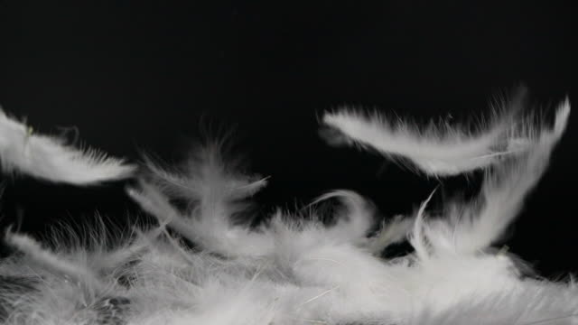 white fluffy feathers falling down on black background - feather stock videos & royalty-free footage