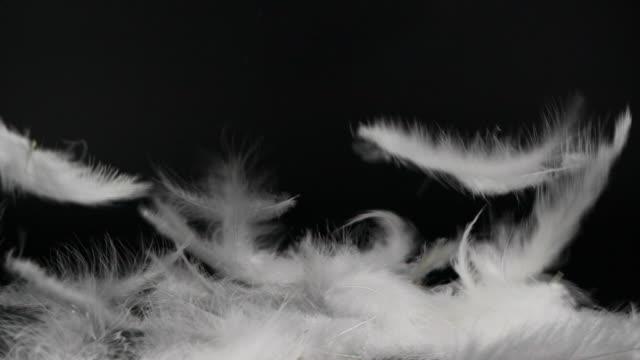 黒い背景に落ちる白いふわふわの羽 - 舞う点の映像素材/bロール