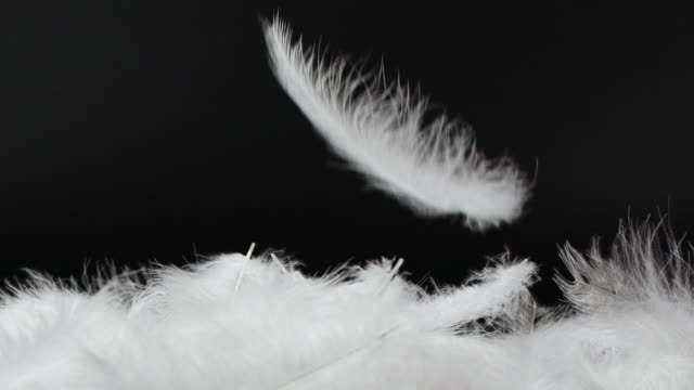 white fluffy feathers falling down on black background - comfortable stock videos & royalty-free footage