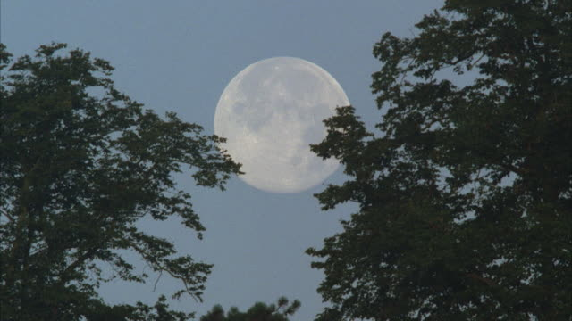 ms, white full moon setting in clear sky, trees on foreground - full moon stock videos & royalty-free footage