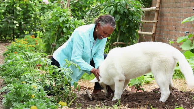 WS White German Shepherd Digging in Home Garden with Senior Woman / Richmond, Virginia, USA