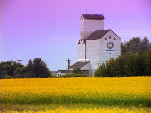 white grain elevator with yellow fields in foreground / brandon, manitoba - manitoba stock videos & royalty-free footage