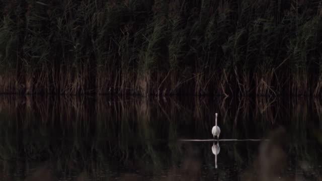 white heron - heron stock videos & royalty-free footage