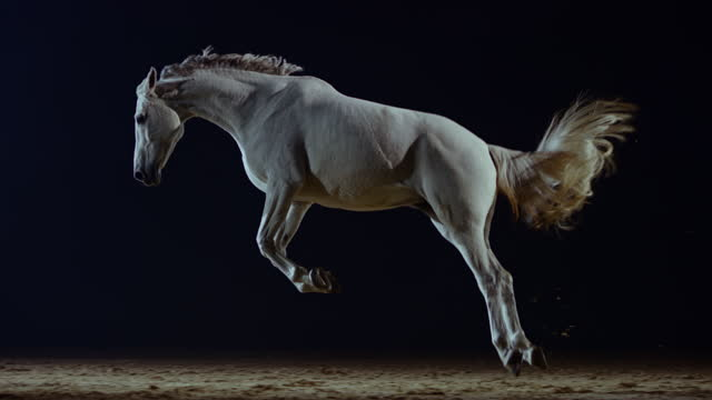 slo mo white horse bucking in the arena at night - bucking stock videos & royalty-free footage