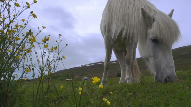 white horse grazing on green meadow