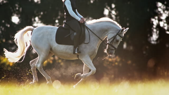 slo mo ts white pferd in canter mit reiterin - pferd stock-videos und b-roll-filmmaterial