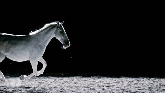 slo mo ld white horse in gallop at night - galopp gangart von tieren stock-videos und b-roll-filmmaterial