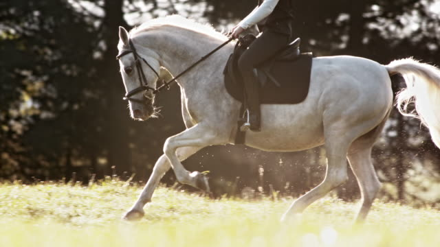 slo mo ts white horse in gallop with female rider - saddle stock videos & royalty-free footage