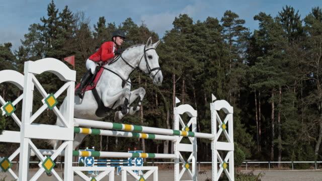 vídeos de stock, filmes e b-roll de rampa de velocidade cavalo branco pulando um boi sob o sol - cavalgar