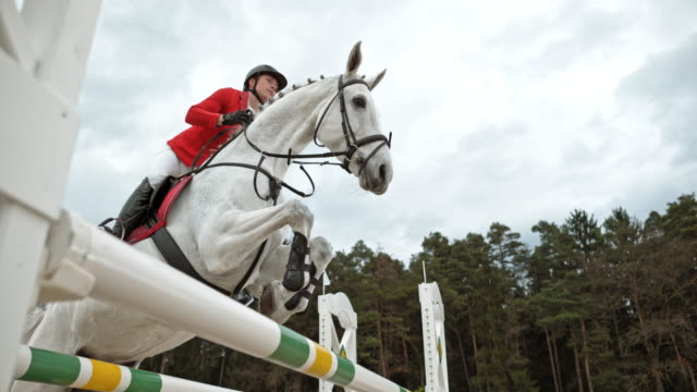 SLO MO White horse jumping an oxer with his rider