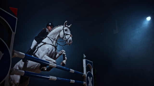 slo mo white horse jumping over a rail in the arena - bridle stock videos & royalty-free footage