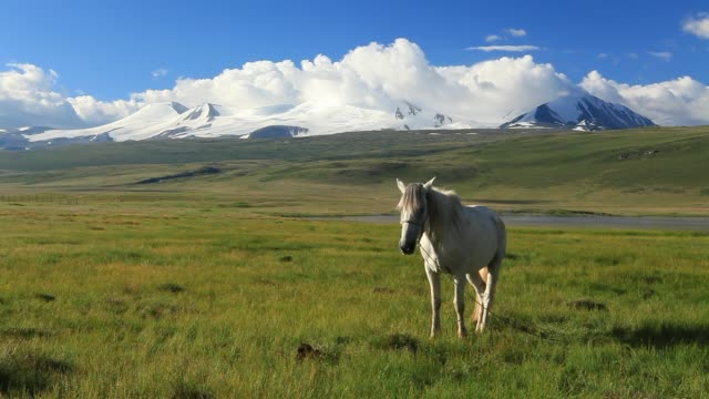 white horse on the meadow in the mountains - 20 seconds or greater stock videos & royalty-free footage