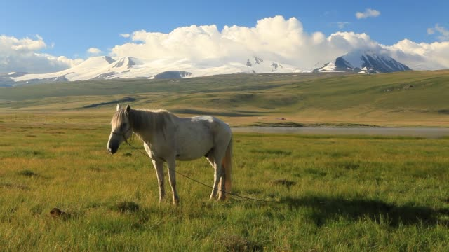 White horse on the meadow in the mountains