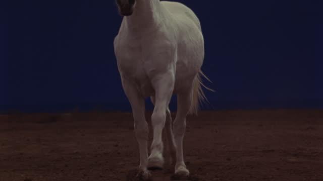 vidéos et rushes de a white horse running in front of a blue screen. - fond bleu