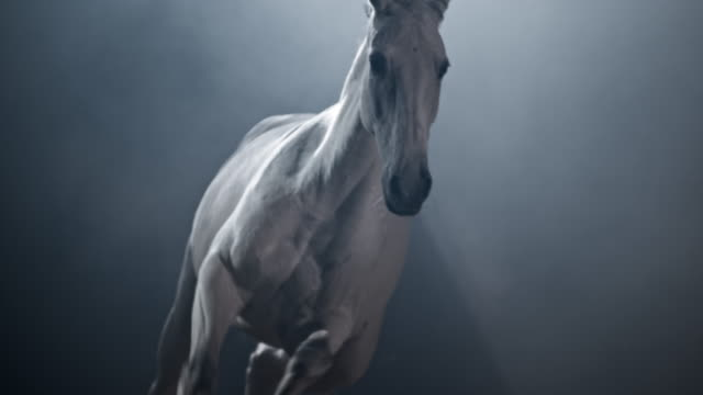 slo mo ds white horse running in the arena at night - horse stock videos & royalty-free footage