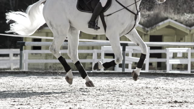 slo mo ts white horse running in the sunny arena - bridle stock videos & royalty-free footage