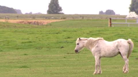 white horse standing on grasslands - tamdjur bildbanksvideor och videomaterial från bakom kulisserna