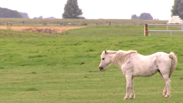 white horse standing on grasslands - domestic animals stock videos & royalty-free footage