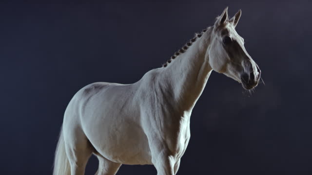SLO MO White horse walking at night