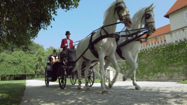ds white horses pulling a carriage a with family along the castle - two animals stock videos and b-roll footage