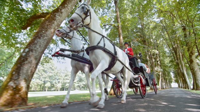 ts white horses pulling a carriage through the park - horsedrawn stock videos & royalty-free footage