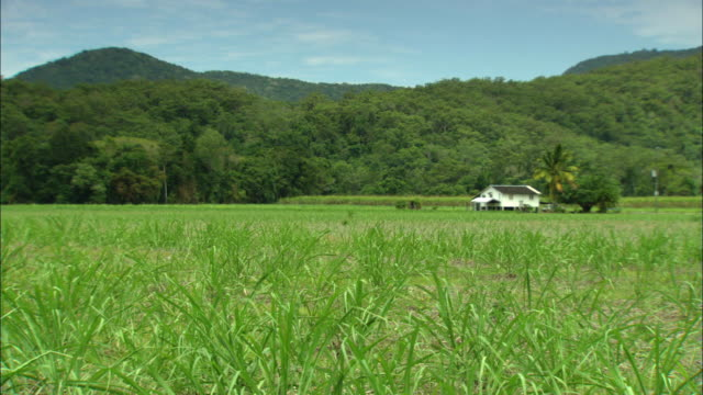 WS White house among green vegetation, Cairns, Queensland, Australia