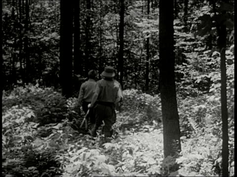 montage white hunter in pith helmet walks through forest with two indian guides cus of lion and tiger in pit india - 1946 stock videos & royalty-free footage