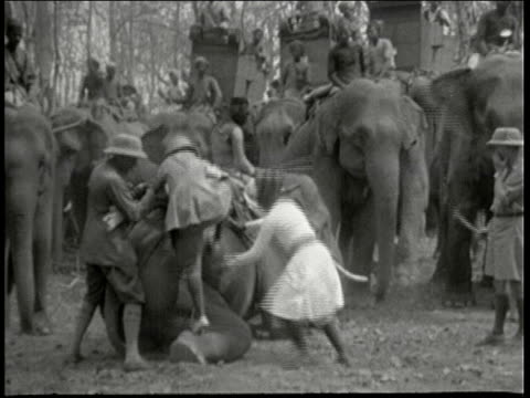 ms white hunter mounts elephant with help from indian guide gir forest india - 1946 stock videos and b-roll footage