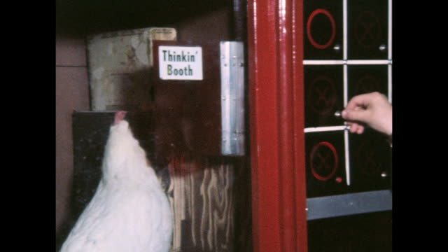 vídeos de stock e filmes b-roll de white leghorn chicken named birdbrain, plays tic tac toe with customers at a penny arcade on motts street in chinatown. the chicken pecks to light up... - jogo do galo