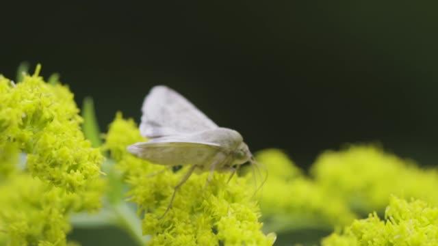 vidéos et rushes de papillon blanc - partie du corps d'un animal