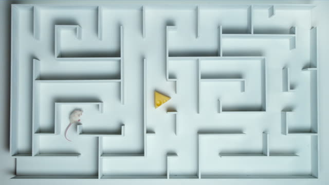ha, ws, white mouse finding peace of cheese in maze - maze stock videos & royalty-free footage