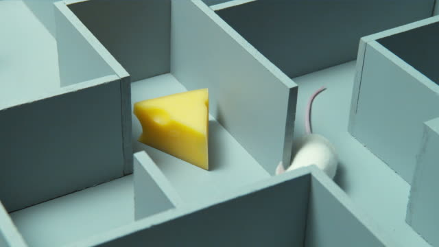 cu, white mouse finding peace of cheese in maze - test drive stock videos & royalty-free footage