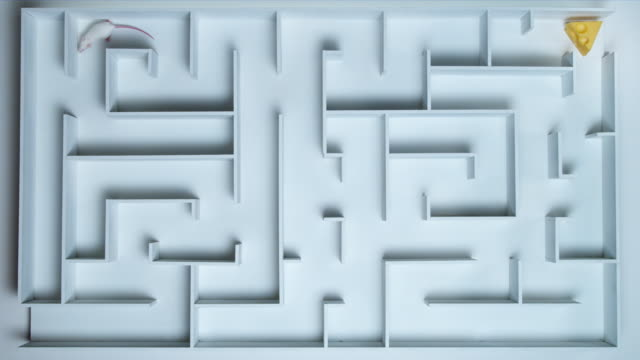 ha, ws, white mouse in maze - maze stock videos & royalty-free footage