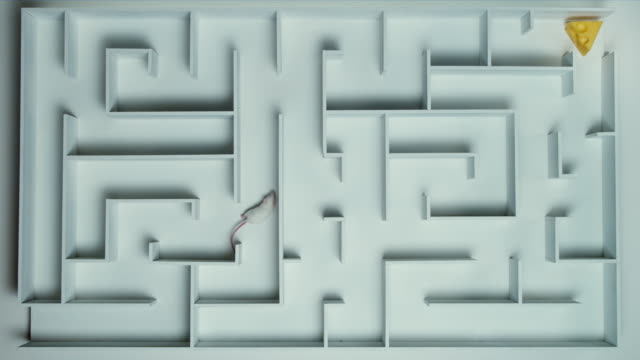 ha, ws, white mouse in maze - decisions stock videos & royalty-free footage