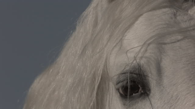 white mustang horse blinking and shaking head - pferd stock-videos und b-roll-filmmaterial