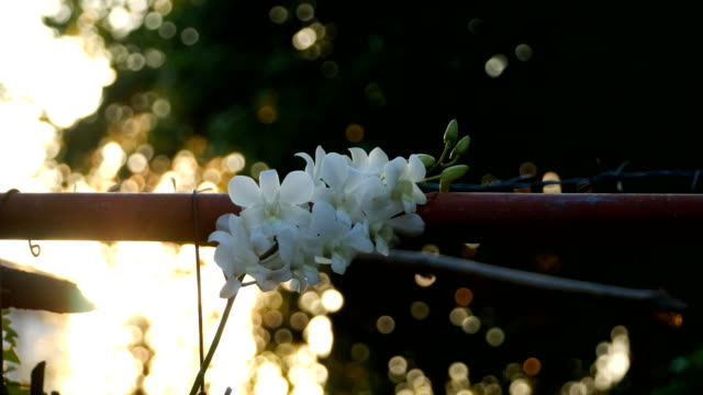 white orchids in garden