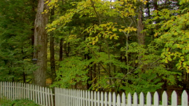stockvideo's en b-roll-footage met ms, td, white picked fence in forest, phoenicia, new york, usa - tuinhek