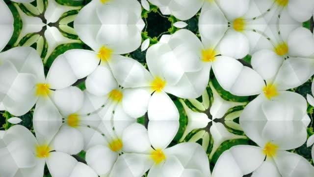 white Plumeria kaleidoscope