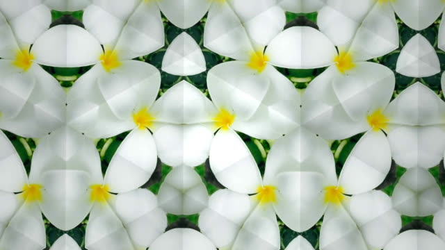 white plumeria kaleidoscope - mosaic stock videos and b-roll footage