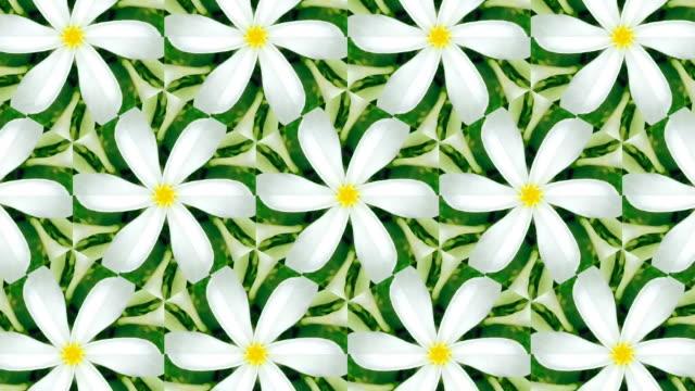 white plumeria kaleidoscope - mosaic stock videos and b-roll footage